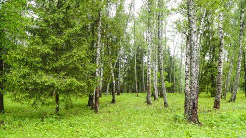Лесной воздух