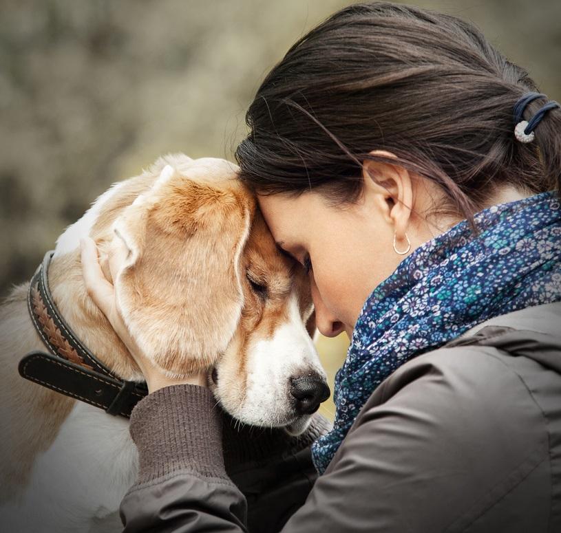 астма и собака в доме