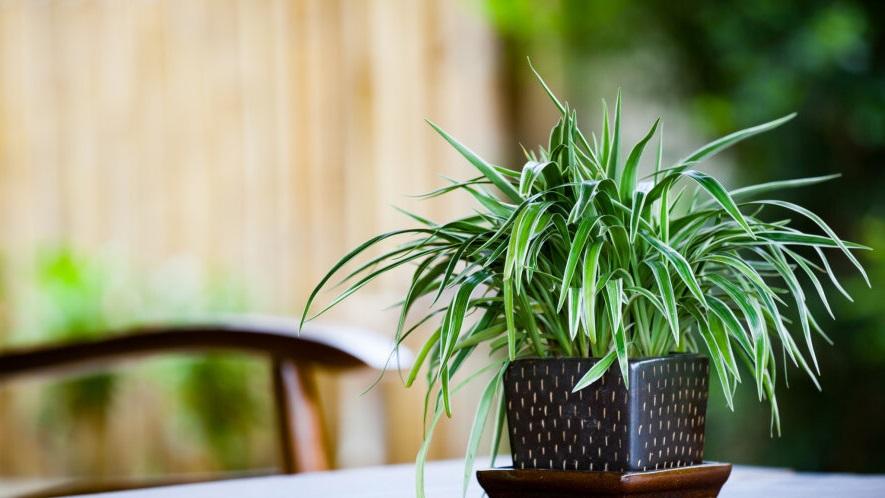 лучшие растения для дома